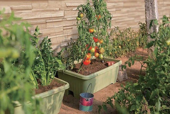 家庭菜園で初心者が始めるのにオススメの野菜は何か調べてみました。